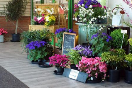 plants-flower-display-at craft-nurseries
